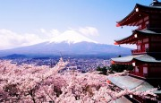 cherry_blossoms_fuji_desktop_4267x3200_wallpaper-340144
